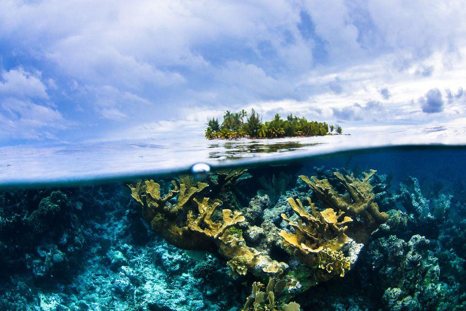 12 υποβρύχιες φωτογραφίες που δείχνουν τον μαγικό κόσμο της