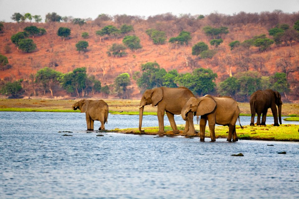 Experts say it's likely the royal couple will travel to Botswana after their