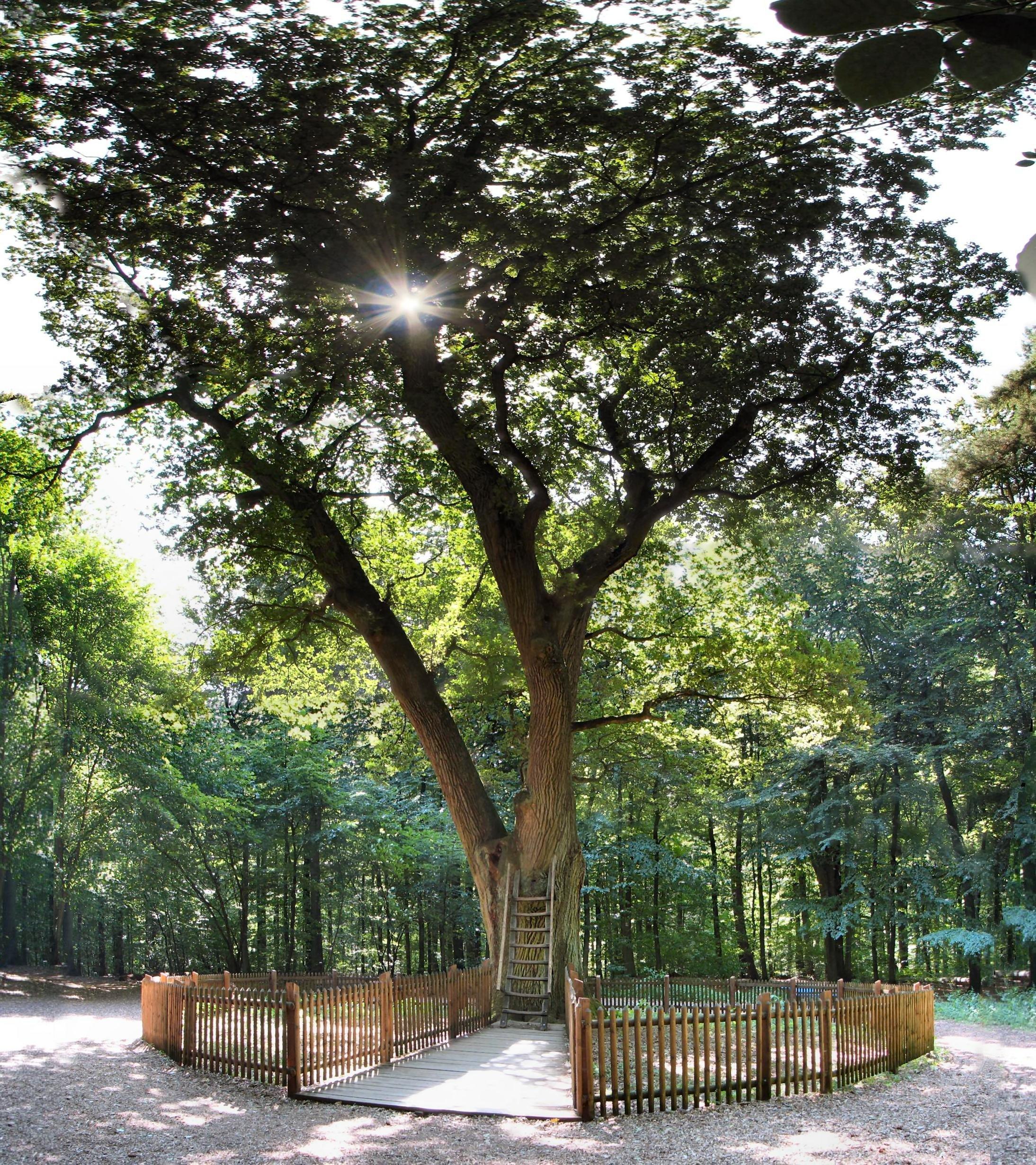 Seit 100 Jahren stecken Menschen Briefe in diesen Baum in Eutin – es kann ihr Leben