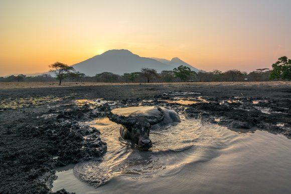 4위 목욕하는 물소. Candra Firmansyah, CC BY-SA
