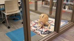 Mann veröffentlicht Bild seines todtraurig schauenden Hundes – nun steht das Telefon nicht mehr still