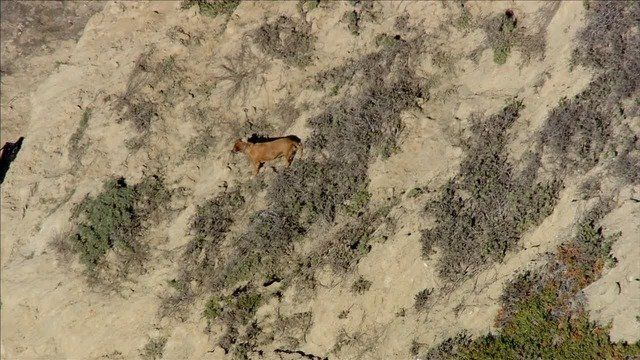 Dog watches rescuers transport his owners body on cliff near San Francisco