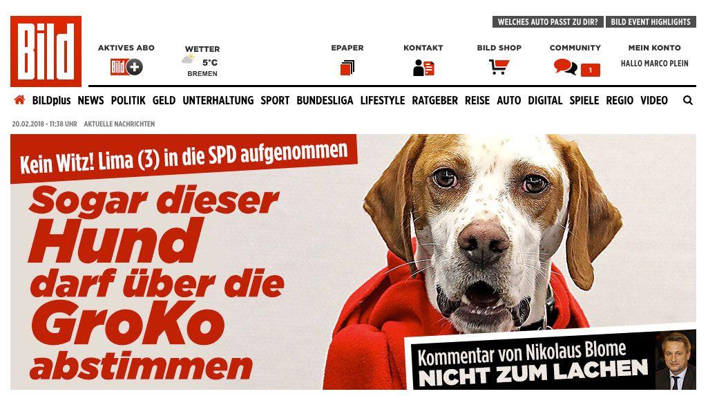 Darf wirklich ein Hund über die Groko abstimmen?