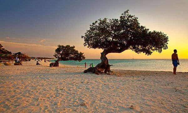 """<a href=""""https://www.tripadvisor.com/Attraction_Review-g147249-d150447-Reviews-Eagle_Beach-Palm_Eagle_Beach_Aruba.html"""" targe"""