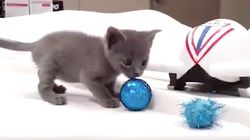 Winter Olympics For Rescue Kittens And Puppies Will Melt The Coldest Of