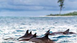 Auf den Punkt: Wie die Seychellen mit einem einzigartigen Deal den Ozean schützen