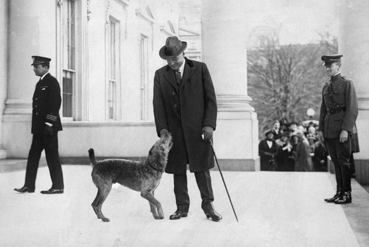 Laddie Boy greets harding at the White House.