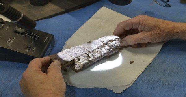 Phytosaur fossil