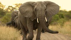 Μπαγκλαντές: Ελέφαντας εισέβαλε σε καταυλισμό και ποδοπάτησε 2