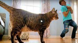 Άνδρας κάνει ότι πεθαίνει για να δει τι θα κάνει η γάτα του και η αντίδραση της είναι η