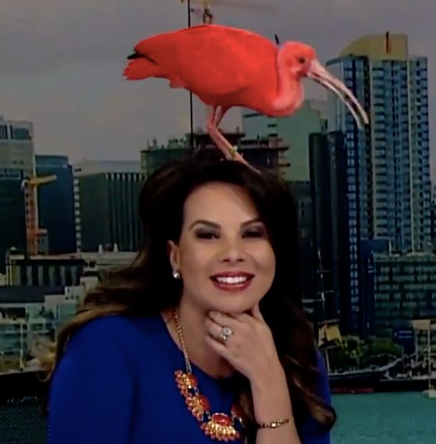KFMB anchorwoman Nichelle Medina had an unexpected guest fly on her head Monday
