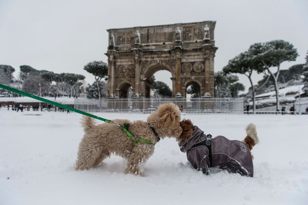 Two canines get acquainted in front of Rome's Arch of