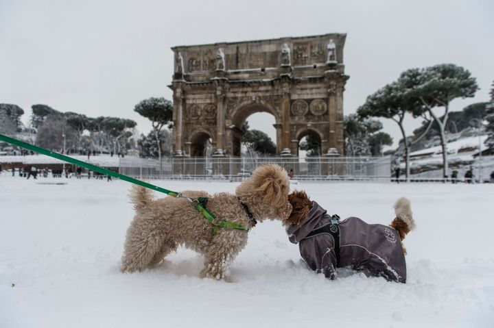 Two canines get acquainted in front of Rome's Arch of Constantine.