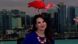 Πορφυρή ίβιδα προσγειώνεται στο κεφάλι παρουσιάστριας ειδήσεων στον αέρα και γίνεται