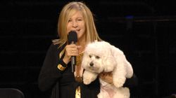 Barbra Streisand Had Her Dog, Samantha, Cloned