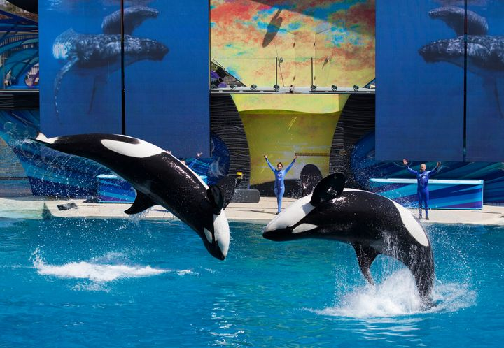 The company announced the endof its orca breeding program and theatrical shows under Manby's leadership in 2016.