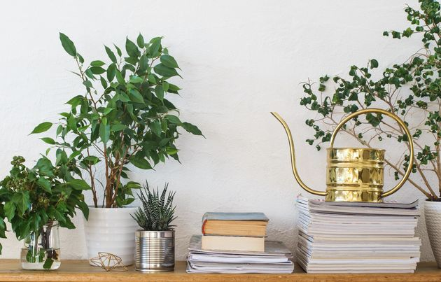 10 Creative Hacks To Add Plants To Your Small