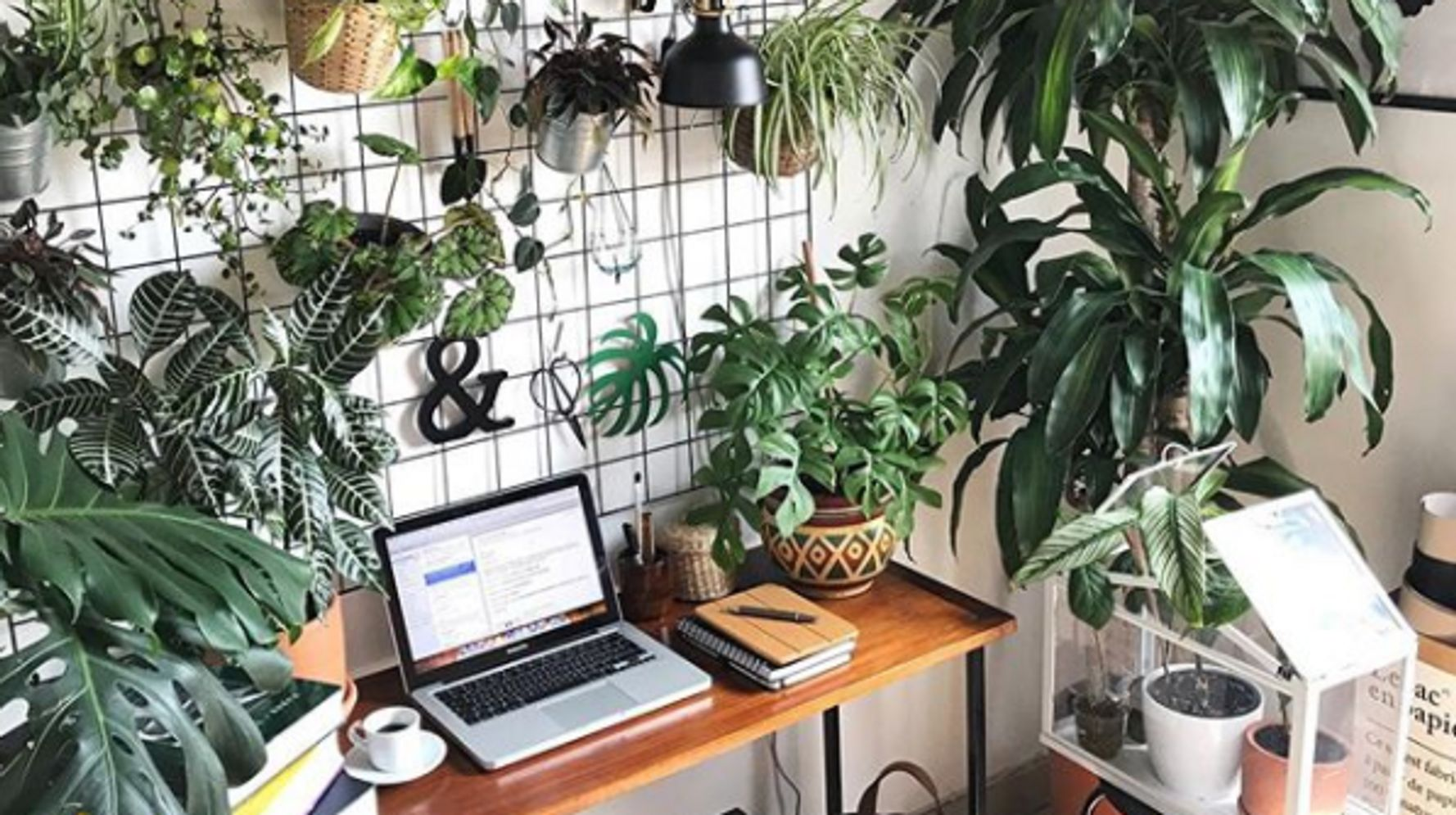 foto de 10 Creative Hacks To Add Plants To Your Small Space | HuffPost Life