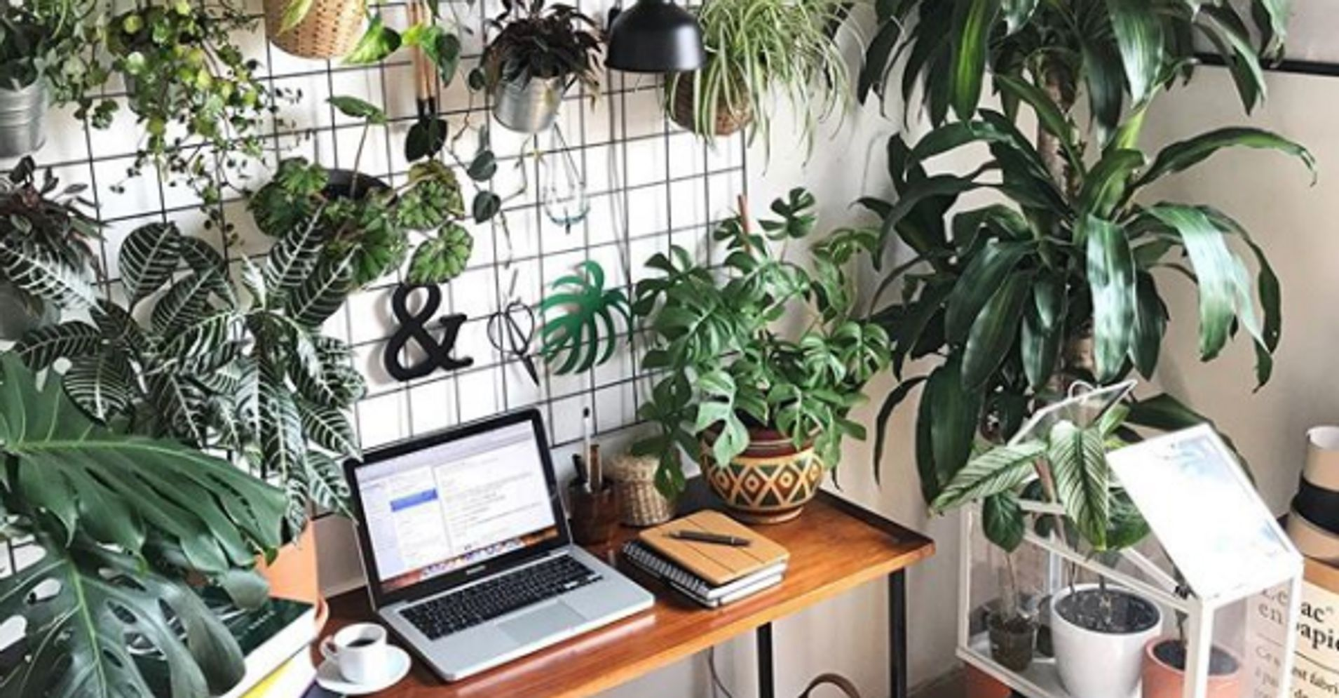 10 Creative Examples For Dividing Small Spaces: 10 Creative Hacks To Add Plants To Your Small Space