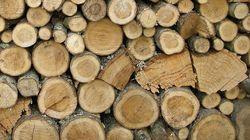 강철만큼 강한 슈퍼목재가