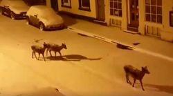 Να βρείτε κάποιον που να διασκεδάζει στο χιόνι όπως αυτά τα