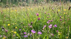 Recolouring The Countryside - Why We Need To Put Meadows Back On the