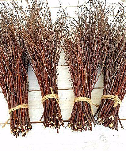 """Get them <a href=""""https://www.amazon.com/150-Birch-twigs-Centerpieces-Thin-branches-birch/dp/B074HZ3LSF/ref=sr_1_15?amp=&ie=U"""