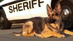 ΗΠΑ: Αστυνομικός σκύλος εξουδετερώνει επικίνδυνο κακοποιό μετά από επεισοδιακή