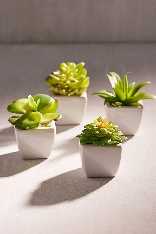 "Get it at <a href=""https://www.urbanoutfitters.com/shop/potted-faux-echeveria-succulent-plant?category=terrariums-indoor-plan"