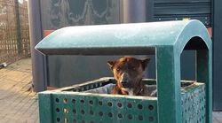 거리의 쓰레기통 속에 있던 개가 나를 보고