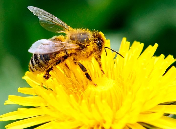 The EU has had a moratorium on the use of neonicotinoids since 2014 after lab research pointed to potential risks for bees.