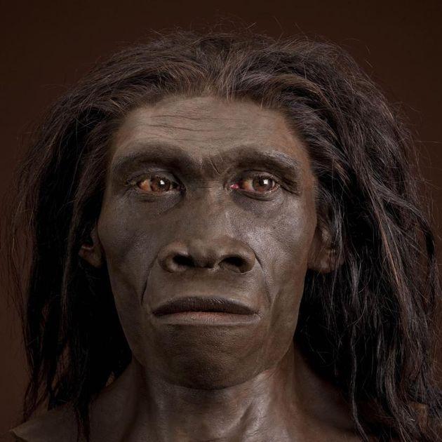 Homo erectus, θυληκός. Αναπαράσταση βασισμένή στο δείγμα ER 3733 από τον John Gurche