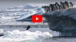 Ανακάλυψαν τεράστια αποικία με 1,5 εκατ. πιγκουίνους στην