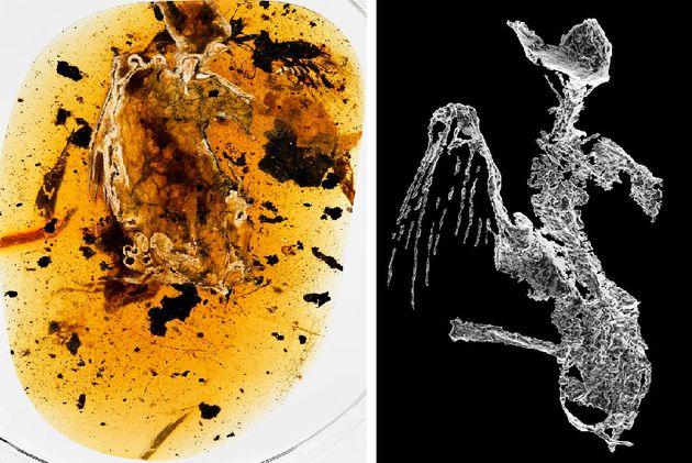 1억년 된 공룡시대 새가 호박(琥珀)에 갇힌 채