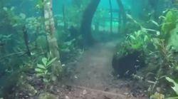 Υποβρύχιο δάσος στη