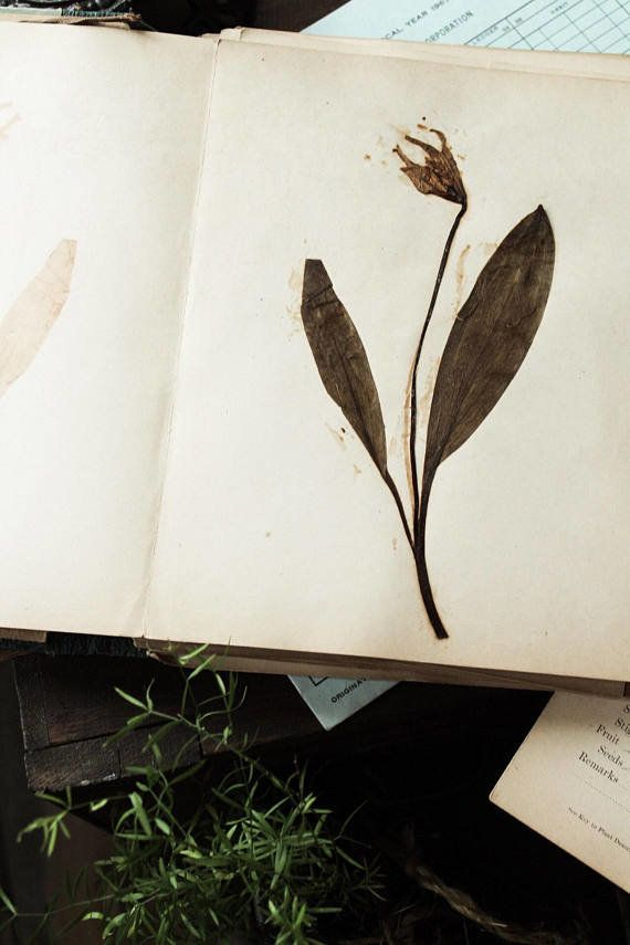 "Get it from <a href=""https://www.etsy.com/listing/532996236/vintage-botanicals-herbarium-flower?ga_order=most_relevant&ga"