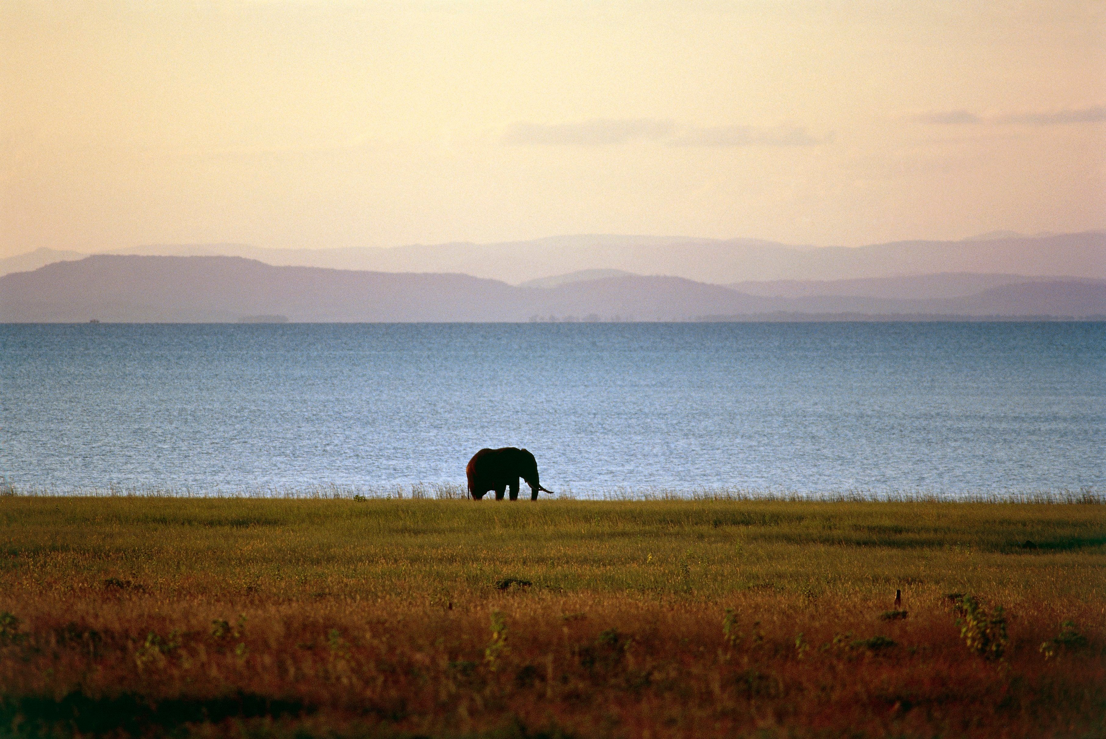 ZIMBABWE - MARCH 18: Elephant, Fothergill Island, Lake Kariba, Zimbabwe. (Photo by DeAgostini/Getty Images)
