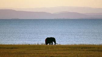ZIMBABWE - MARCH 18: Elephant, Fothergill Island, Lake Kariba, Zimbabwe. (Photo by DeAgostini/Getty Images)