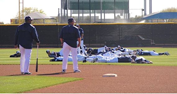 Stinging For The Fences: Bees Swarm Padres Coaching Camp Once more