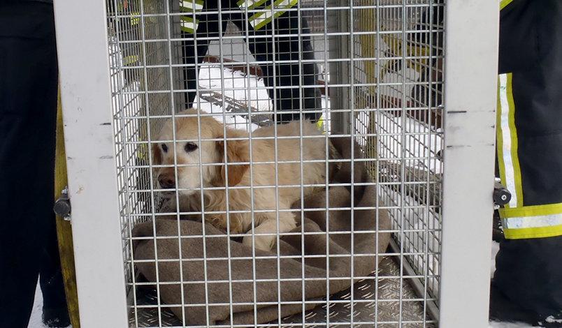 Köln: Passanten entdecken Hund auf Schiff  – seine Lage ist lebensgefährlich