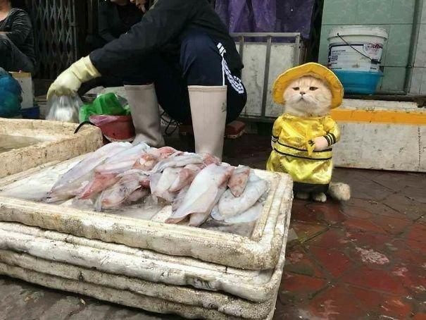 베트남에는 생선 파는 고양이가