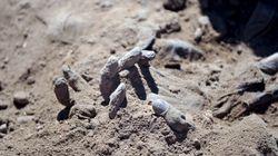 Τι κρύβει η φρικώδης ανακάλυψη δεκάδων κομμένων χεριών σε επαρχιακή πόλη της