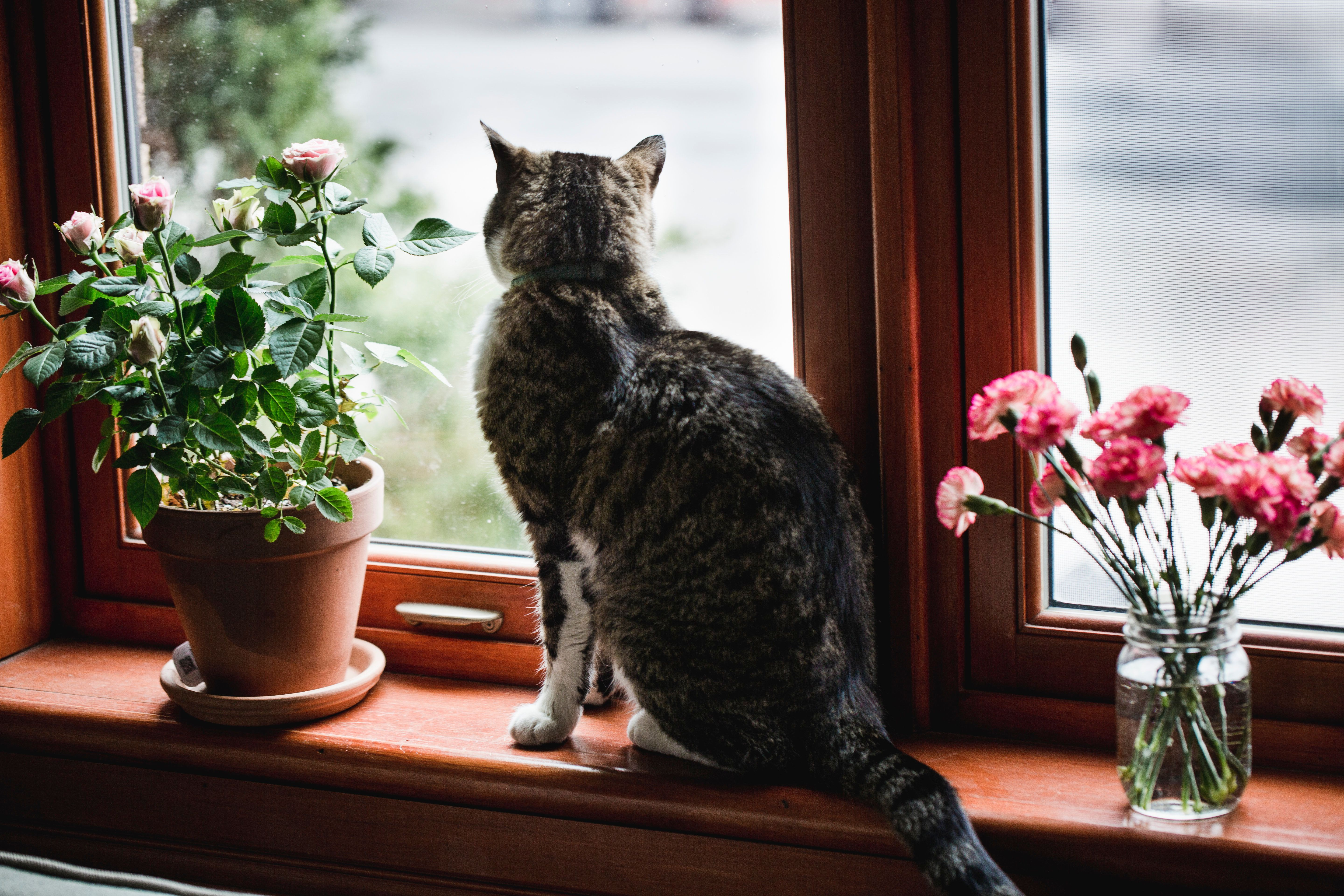Don't Buy Mum Lilies If She Has A Cat, Warns