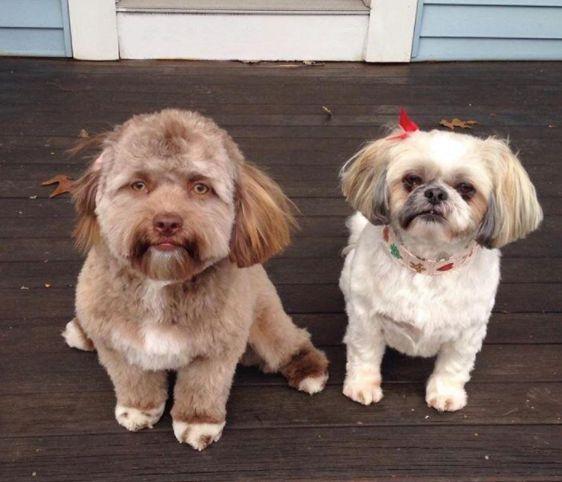 Hund sorgt im Internet für Wirbel – weil Nutzer in seinem Gesicht etwas Unheimliches erkennen