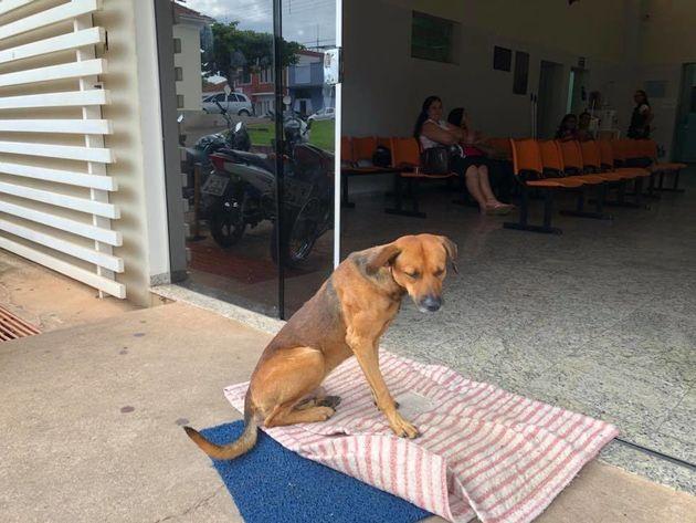 이 개는 병원 앞에서 4개월째 주인을 기다리고