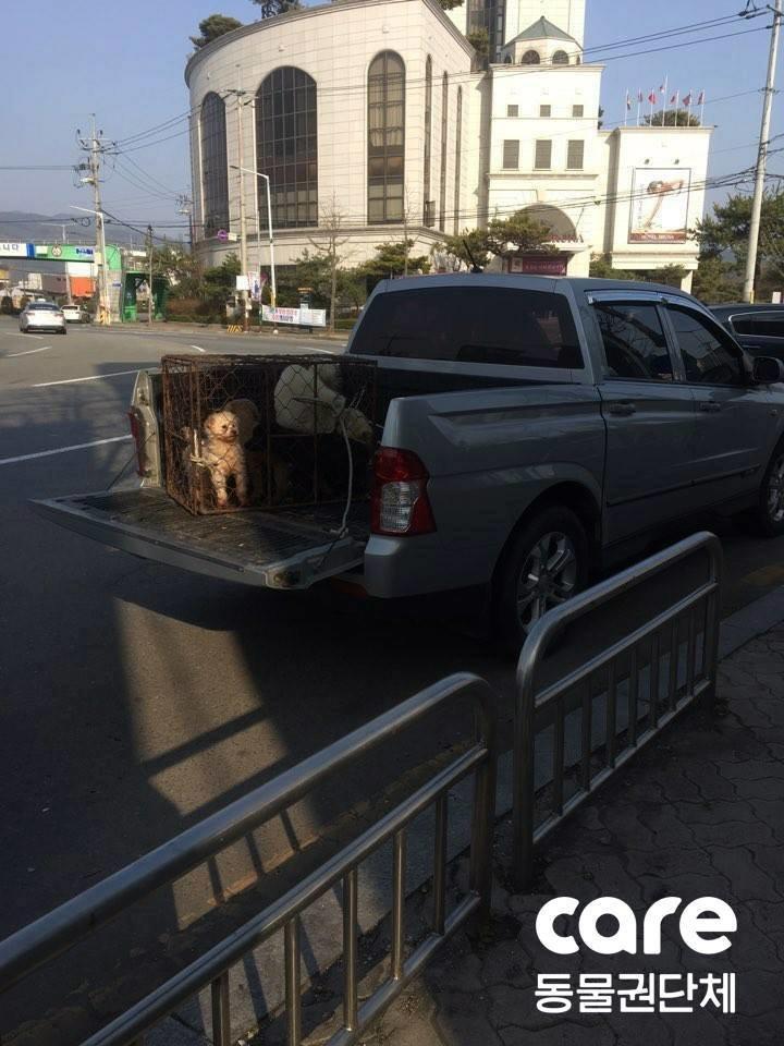 어느 동물병원이 보호 중인 유기견을 개장수에게