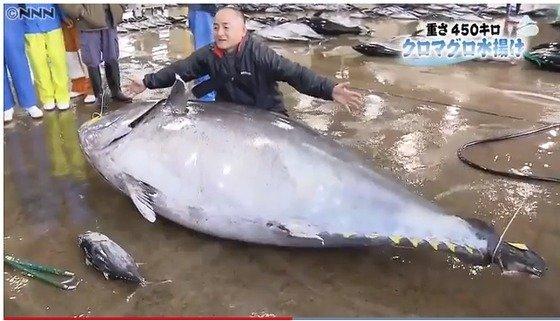 일본에서 '역대 2위 중량'을 기록한 거대 참치의