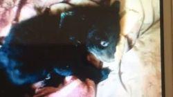 Chinese glaubt, Hundewelpen gefunden zu haben – Monate später schaut er einer Bestie in die Augen