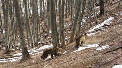 Ξύπνησαν οι αρκούδες, ήρθε η
