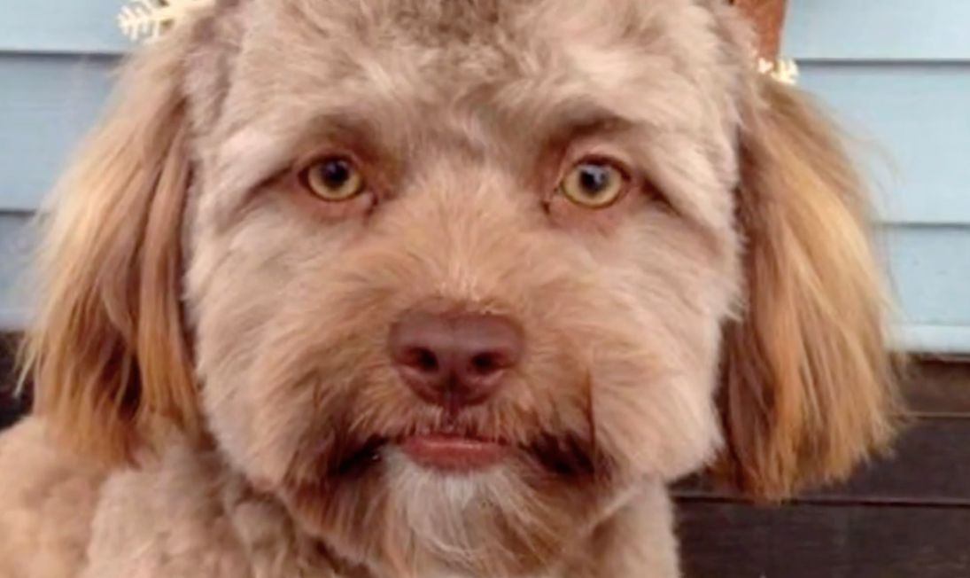 This Puppy With A Strangely Human Face Is Freaking Out The